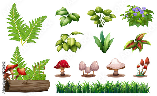 Set of forest plants - 217016242