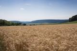 Getreidefeld kurz vor der WErnte - 217028087