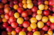 red yellow plums - 217031636