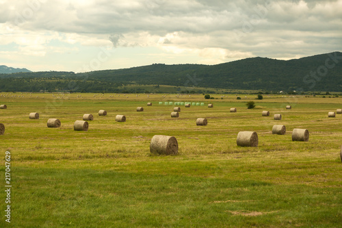 Foto Spatwand Honing Freshly cut and rolled Hay Bales lay on a field.