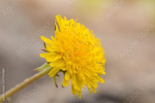 Flower Closeup - 217053484