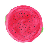 Watercolor illustration of Pitaya - 217059451
