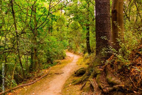 Fotobehang Weg in bos Camino en el bosque