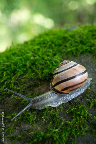 Foto Murales Snail on a Mossy Rock