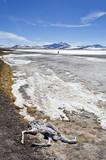 paisaje de cordillera con esqueleto de vicuña  - 217073822