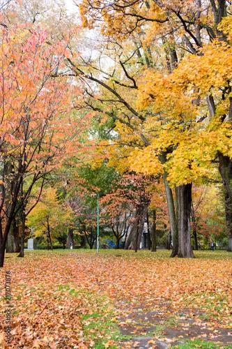Plexiglas Oranje 秋の公園