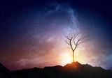 Lonely dead tree - 217090681