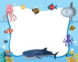 An underwater animals border