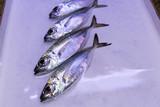 pescado fresco del mar - 217092689