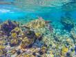 Quadro Turtle in the reef