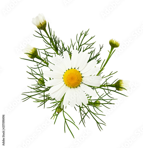 Foto Murales Daisy flowers and buds in a floral arrangement