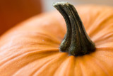 vegetables, harvest and thanksgiving concept - close up of pumpkin with stem - 217109002