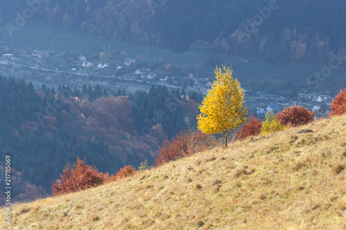 Fotobehang Beige Birch with yellow leaves on a hill