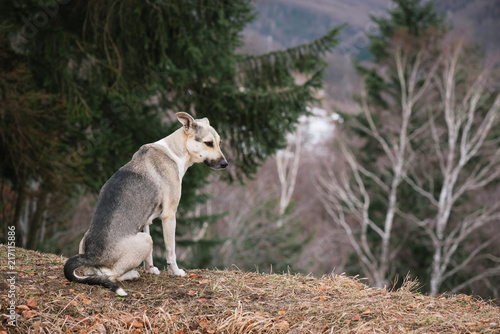 Fotobehang Grijs Gray dog on a hill in the forest