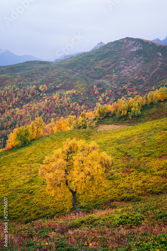Foto Spatwand Honing Autumn landscape in the mountains
