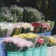 Quadro Flowers market
