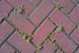 Red paving stones with green grass on top - 217127610