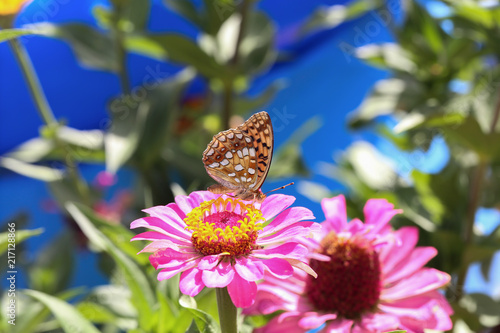 Foto Spatwand Vlinder Butterfly sits on a flower