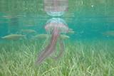 Méduse aux îles Lavezzi