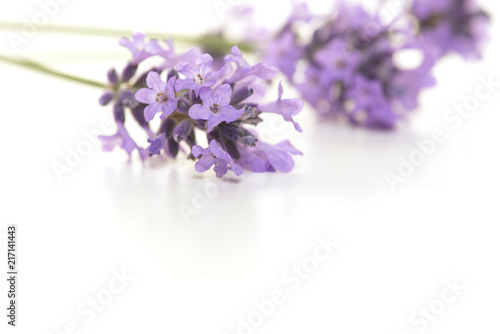 Real lavender flowers on a white background with space for copy