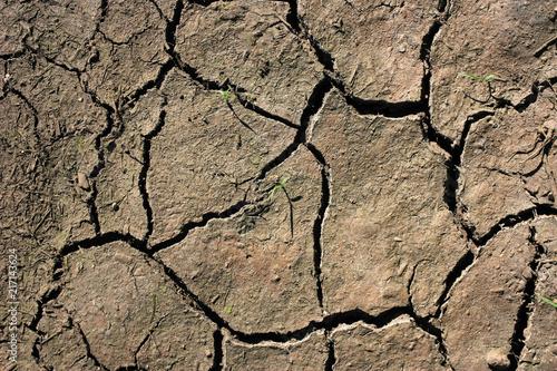 Foto Murales Earth in cracks