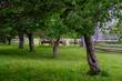 Apple orchard garden in heritage settlement