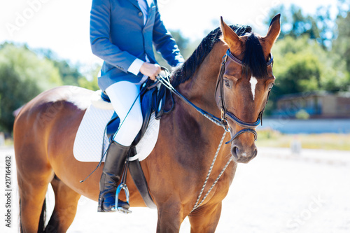 Foto Murales Horse riding. Strong sportsman enjoying horse riding doing it on nice warm summer day