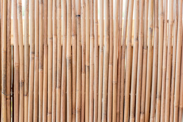 Bamboo fence texture background in beautiful summer light © Thousand Lines