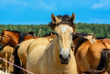 a herd of horses on a farm field