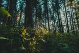 Landschafts