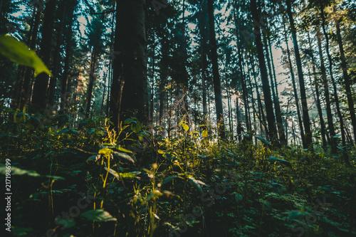 Foto Murales Landschafts