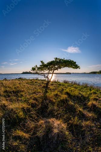 Foto Murales Colorful tree landscape, beautiful sunset nature