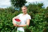Young girl gardener in white T-shirt gather a harvest raspberry on summer day
