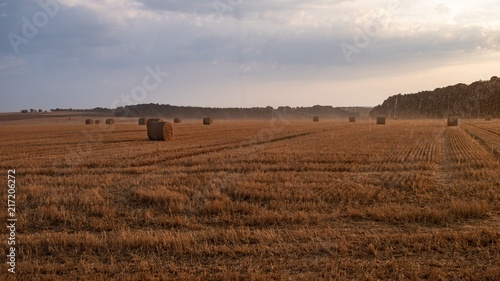 Foto Spatwand Diepbruine landscape scenery hay bales rain