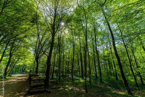 Fotobehang Landschappen Ballade en fôret