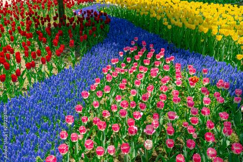 In de dag Tulpen チューリップ 春イメージ