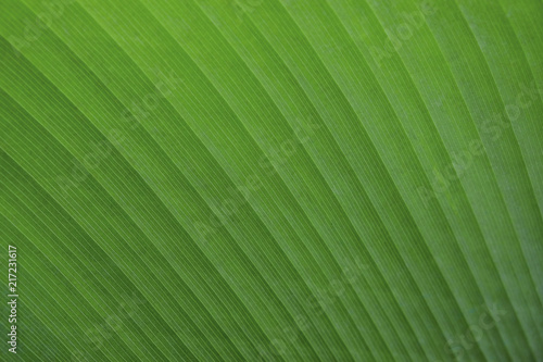 Foto Murales Green leaf texture background
