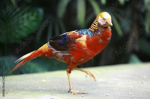 Foto Spatwand Papegaai Birds