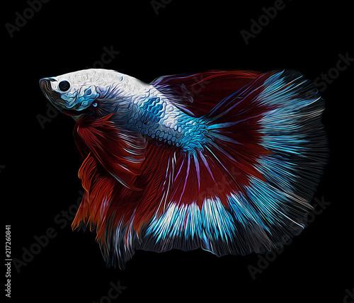 oil paint siames fighting fish..Halfmoon betta..betta splendens - 217260841