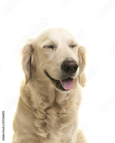 Foto Murales Portrait of a golden retriever dog with eyes closed on a white background