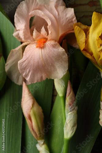 Aluminium Iris Pink iris flowers