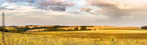 Panoramic shot of summer morning countryside with fields - 217272474