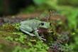 frog, green, cute