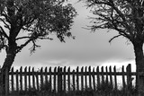 Black and white silhouette of an old wooden rural fence standing between two trees - 217289650