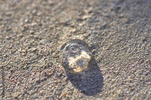 Fototapeta a small transparent jellyfish on the background of sand glows in