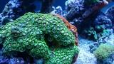 Egipt rafa koralowa © Piotr