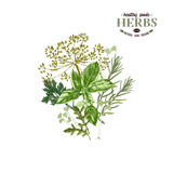 Hand drawn background with herbs - 217314486