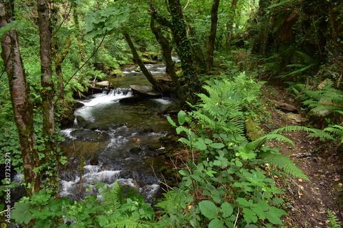 Fotobehang Weg in bos Rio y camino