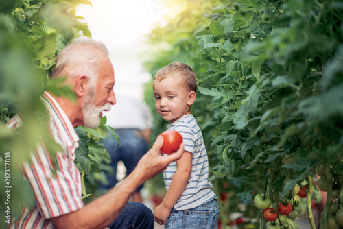 Grandfather and his grandson in a greenhouse. - 217337838