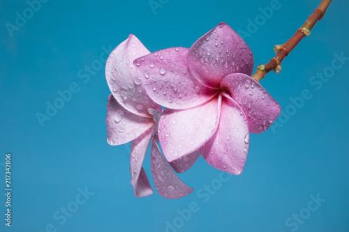 szczegół tekstura bukiet kwiatów w słoneczny zewnątrz